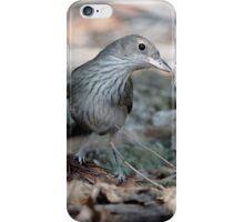 Grey Shrike Thrush iPhone Case/Skin