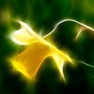Fractilius Daffodil by Jeremy Owen