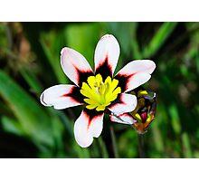 California Wildflowers • Marin Headlands  •  Series Photographic Print