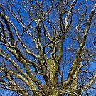 MY BEAUTIFUL TREE by leonie7