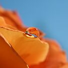 Orange rose bubble 1 by SKNickel