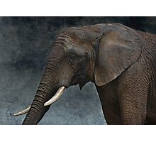 friendly african giant Photographic Print