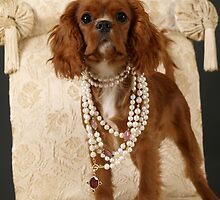 Cavalier King Charles Spaniel  by Maria Bell