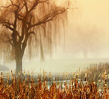 Calm in the fog by Cricket Jones