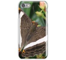 Mexican Sister - Adelpha fessonia iPhone Case/Skin