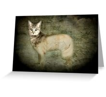 Canis felidae Greeting Card