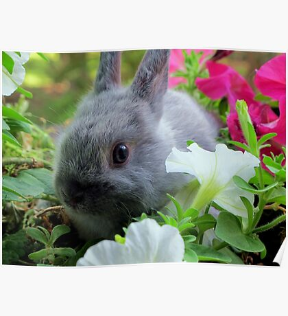 Blossoming Bunny Rabbit Poster