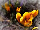 Spring Crocus by Aaron Campbell