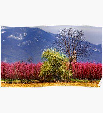 Spring flowering Poster