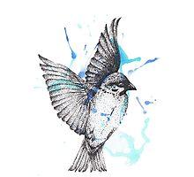Dotwork Bird Photographic Print