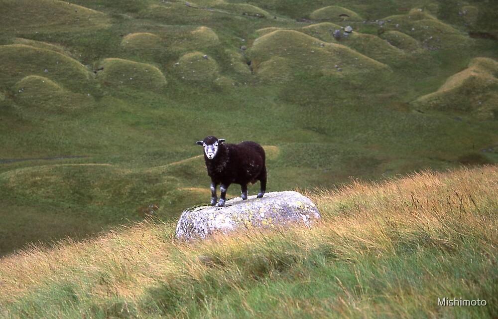 Black Sheep, Lake District by Mishimoto