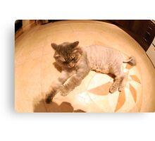 360 Cat Canvas Print