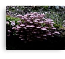 Pinks in the Forest Canvas Print