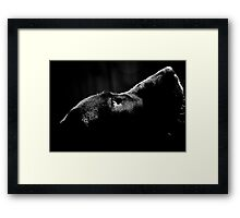 Sweet Thing in BW Framed Print