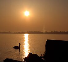 SWAN AT SUNRISE by JimmyTNT