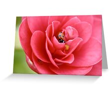 Pink Camellia Flower And ladybug Greeting Card