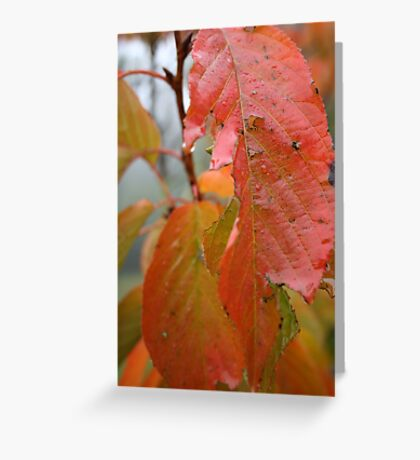 Coloured dew Greeting Card
