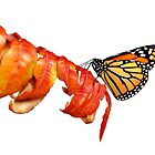 Autumn Monarch 2 by Renee Dawson