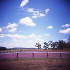 Summer Fields by Leanne Smith