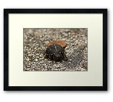 Tiny Baby Box Turtle Framed Print