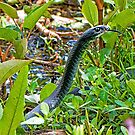 Black Racer by Photography by TJ Baccari