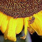 Long life, bees..Long life, humans by Sassafras