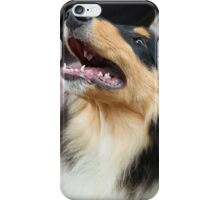Rough Collie II iPhone Case/Skin