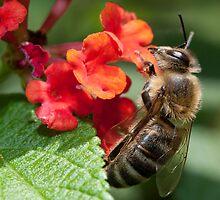 Busy as a Bee by Mark van den Hoek