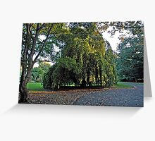 Weeping Beech~ Greeting Card