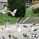Seagulls among the pigeons by AndrewWakelin