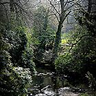 Spring in the Dene by Ladymoose