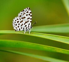 Little Forest Pierrot 1 by Tony Wong