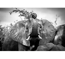 Silly Elephant Photographic Print