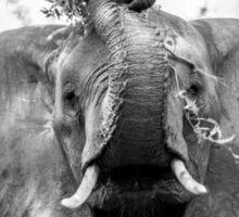 Silly Elephant Sticker