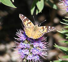 Butterfly 2 by Sandra Gray