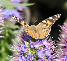 Butterfly 3 by Sandra Gray
