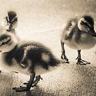 Ducklings by Sue Morgan
