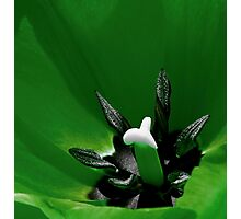 Green Tulip Macro Photographic Print