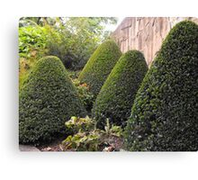 Topiary Garden Canvas Print