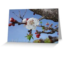 Bark, Blossom, and Blue Sky Greeting Card