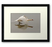 Swan Taking Flight Framed Print