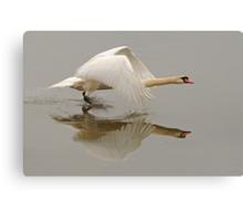 Swan Taking Flight Canvas Print