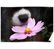 Charlie smelling the flowers or eating them Poster