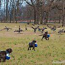 Duck Duck Goose by Jeniella Goci
