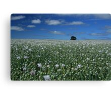 coloured poppies Canvas Print