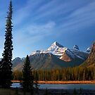 Icefields Parkway National Park, Lodgepole Pine and river, Alberta, Canada. by photosecosse /barbara jones
