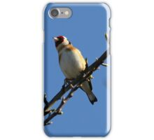 Goldfinch on a branch iPhone Case/Skin