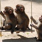 Monkeys of Japan by gottheshot