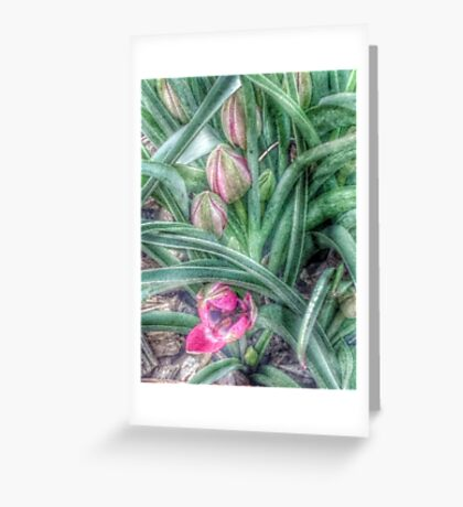 Species Tulips Greeting Card