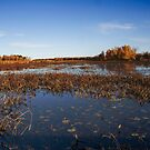 Marshy by Sean McConnery